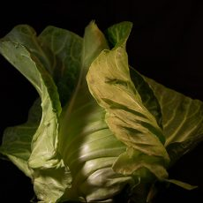 Niet te vergeten groenten (2)
